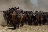 Yolo Land and Cattle 2014IMG_5258