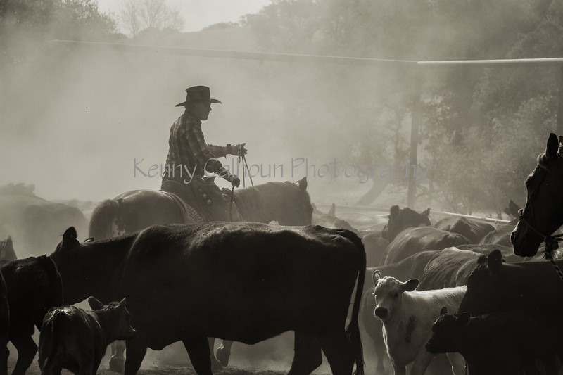 Yolo Land and Cattle 2014IMG_4673-Edit