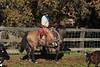 YL&C_11-25-12November_24,_2012IMG_2903untitled