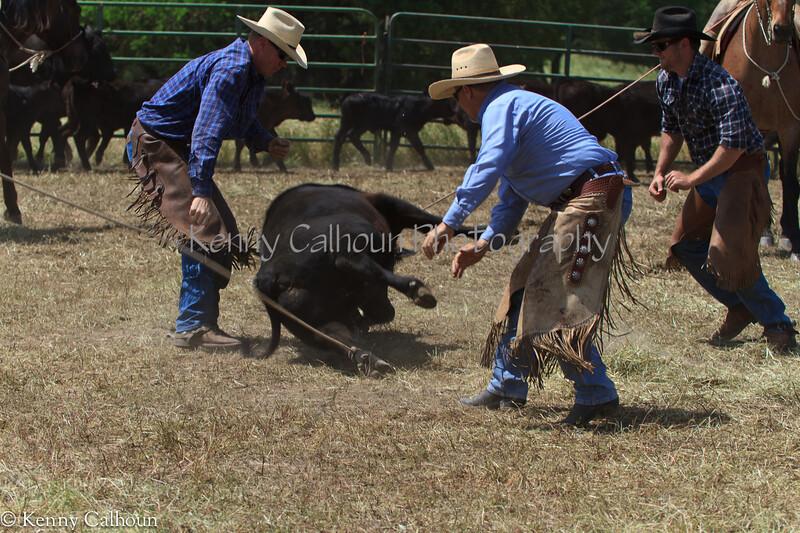 April_28,_2012IMG_0198untitledYolo_Land_&_Cattle_4-29-12