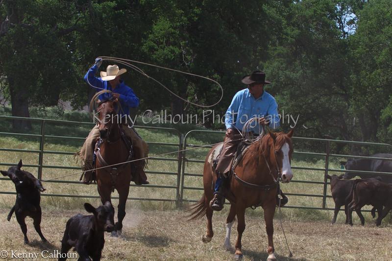 April_28,_2012IMG_0268untitledYolo_Land_&_Cattle_4-29-12