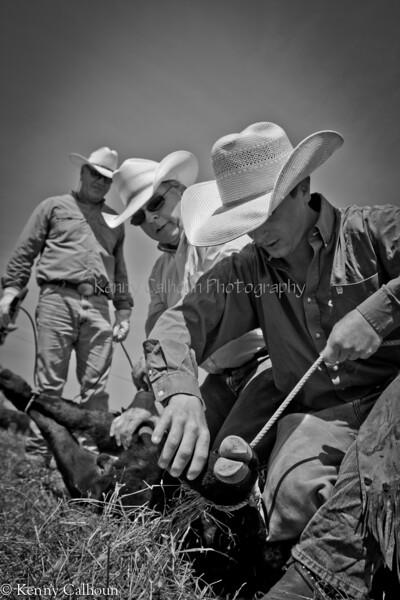 April_29,_2012IMG_8693untitledYolo_Land_&_Cattle_4-29-12