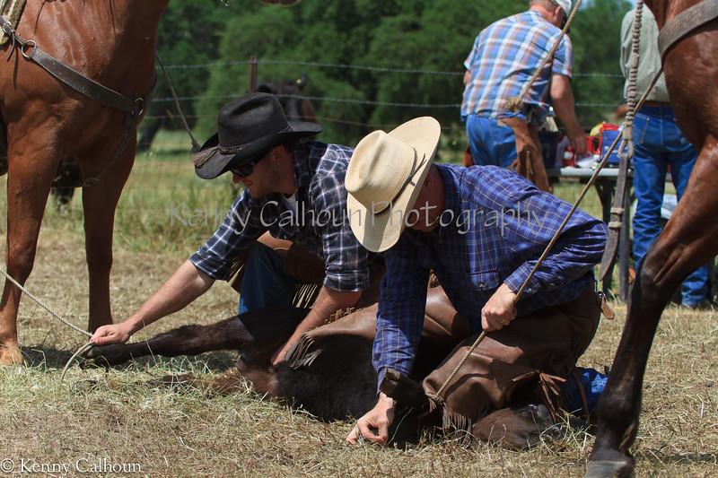 April_28,_2012IMG_9996untitledYolo_Land_&_Cattle_4-29-12