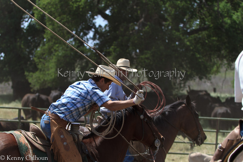 April_28,_2012IMG_0546untitledYolo_Land_&_Cattle_4-29-12
