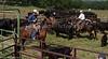 April_29,_2012IMG_8570untitledYolo_Land_&_Cattle_4-29-12