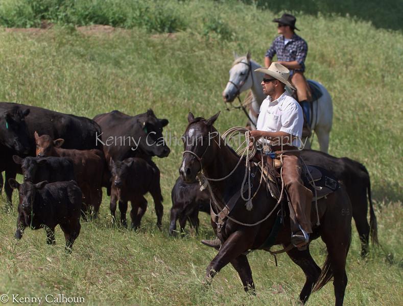 April_28,_2012IMG_9543untitledYolo_Land_&_Cattle_4-29-12