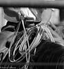 April_28,_2012IMG_9656untitledYolo_Land_&_Cattle_4-29-12-2