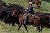 April_28,_2012IMG_9527untitledYolo_Land_&_Cattle_4-29-12-3
