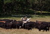 April_29,_2012IMG_8484untitledYolo_Land_&_Cattle_4-29-12