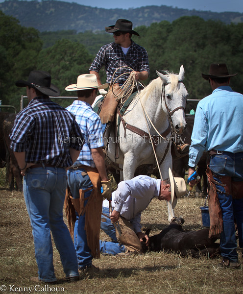 April_28,_2012IMG_9739untitledYolo_Land_&_Cattle_4-29-12