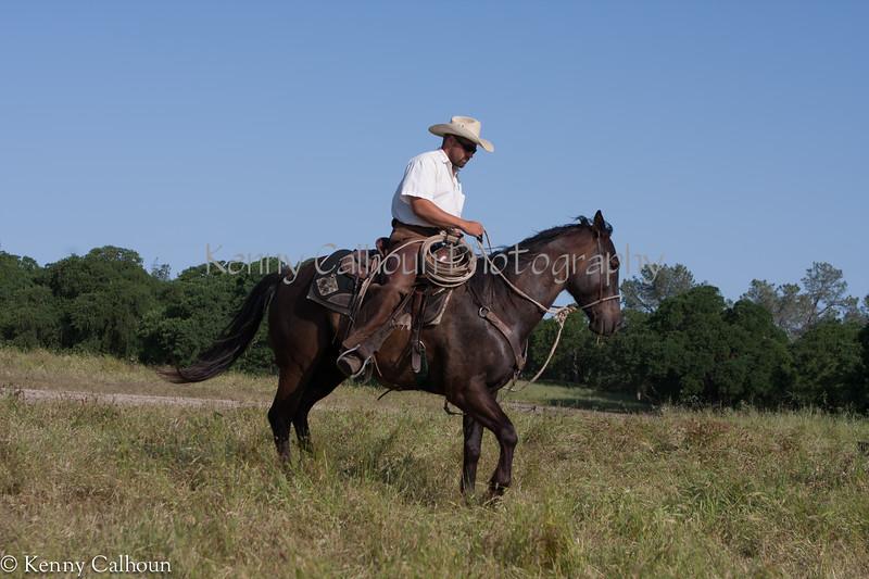 April_29,_2012IMG_8433untitledYolo_Land_&_Cattle_4-29-12