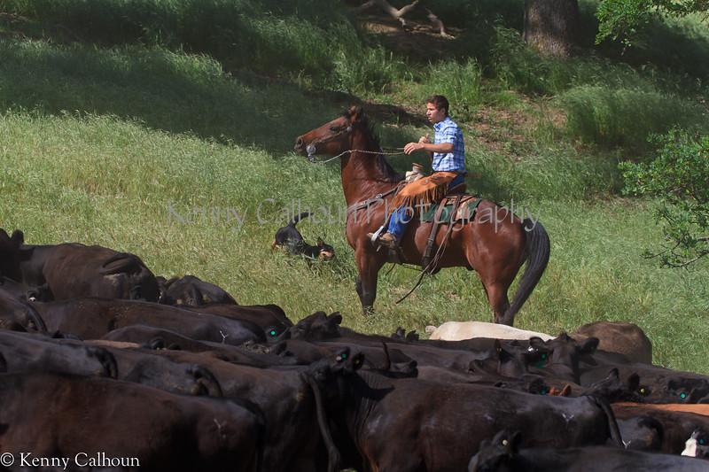 April_28,_2012IMG_9522untitledYolo_Land_&_Cattle_4-29-12