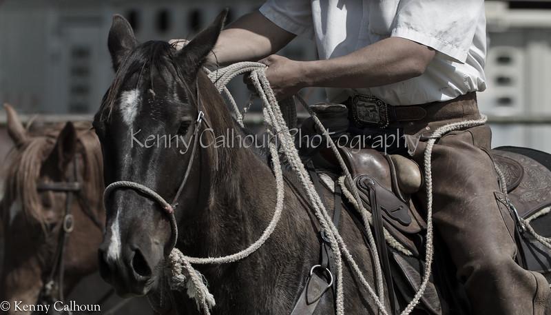 April_28,_2012IMG_9641untitledYolo_Land_&_Cattle_4-29-12