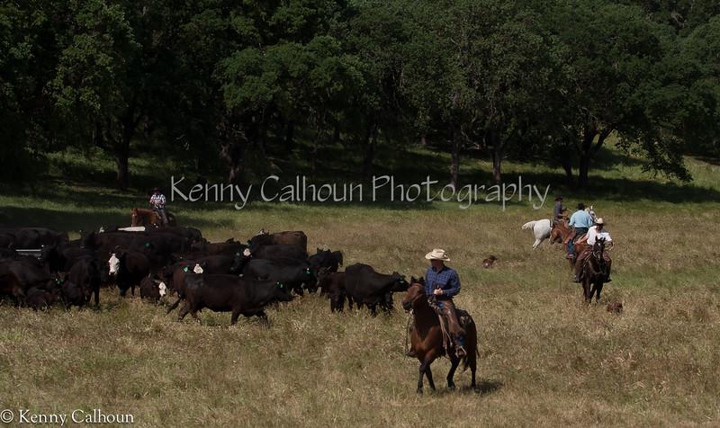 April_29,_2012IMG_8494untitledYolo_Land_&_Cattle_4-29-12