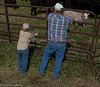April_29,_2012IMG_8534untitledYolo_Land_&_Cattle_4-29-12