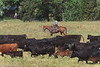 April_28,_2012IMG_9419untitledYolo_Land_&_Cattle_4-29-12