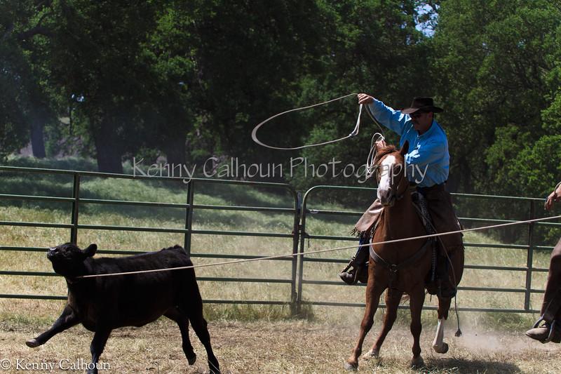 April_28,_2012IMG_0393untitledYolo_Land_&_Cattle_4-29-12