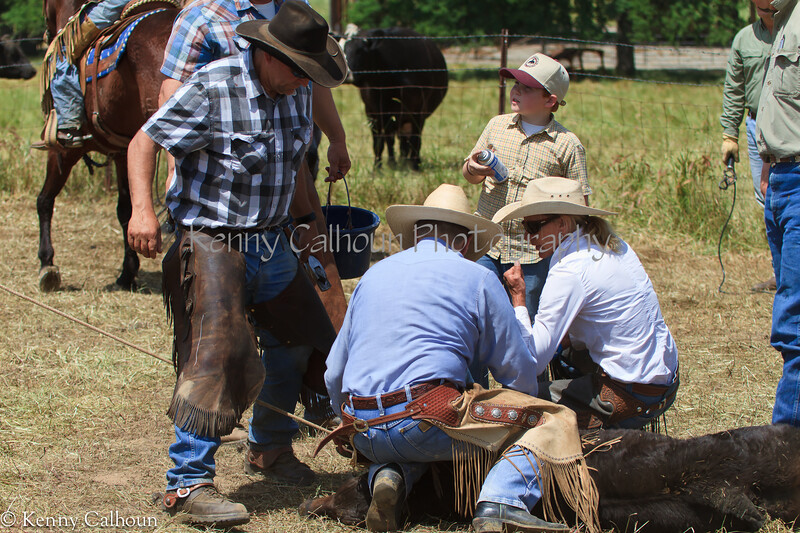 April_28,_2012IMG_0150untitledYolo_Land_&_Cattle_4-29-12