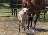 April_28,_2012IMG_0345untitledYolo_Land_&_Cattle_4-29-12