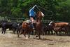 April_28,_2012IMG_0179untitledYolo_Land_&_Cattle_4-29-12