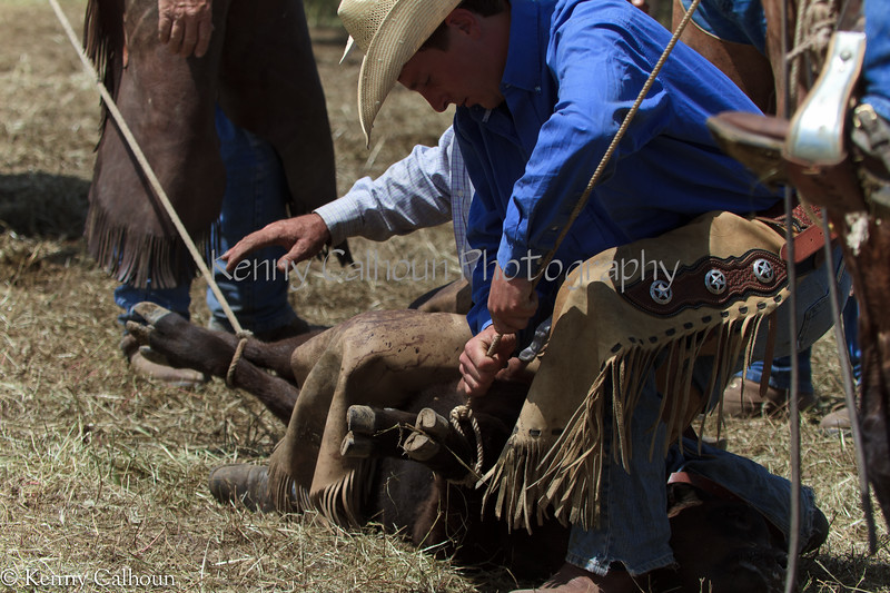 April_28,_2012IMG_9886untitledYolo_Land_&_Cattle_4-29-12-3
