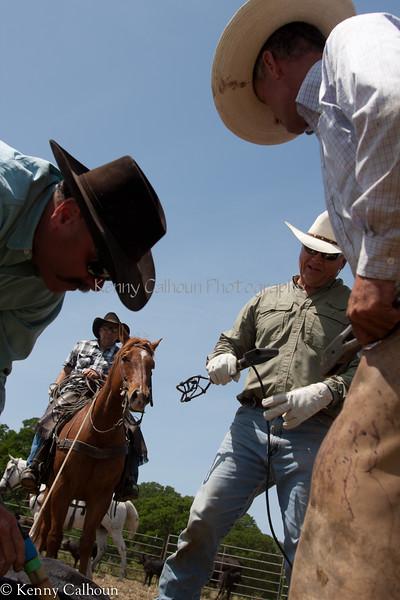 April_29,_2012IMG_8723untitledYolo_Land_&_Cattle_4-29-12