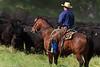 April_28,_2012IMG_9491untitledYolo_Land_&_Cattle_4-29-12