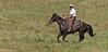 April_28,_2012IMG_9480untitledYolo_Land_&_Cattle_4-29-12
