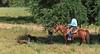 April_28,_2012IMG_9423untitledYolo_Land_&_Cattle_4-29-12