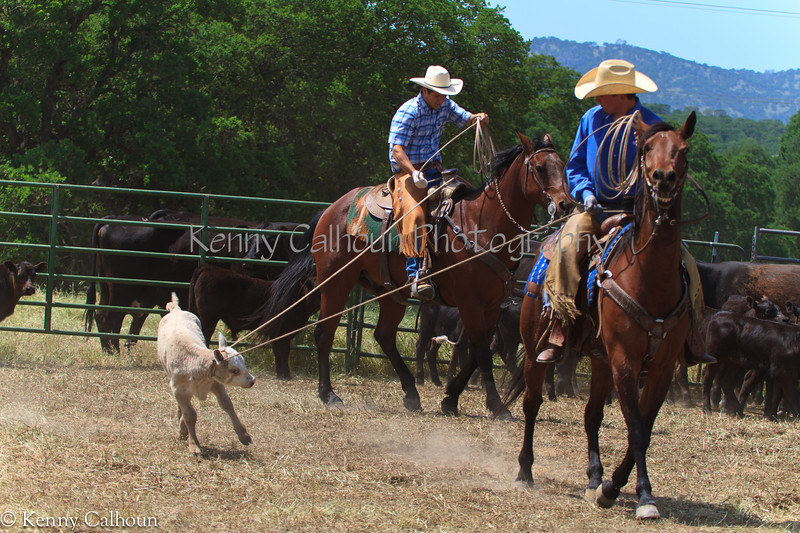 April_28,_2012IMG_0363untitledYolo_Land_&_Cattle_4-29-12