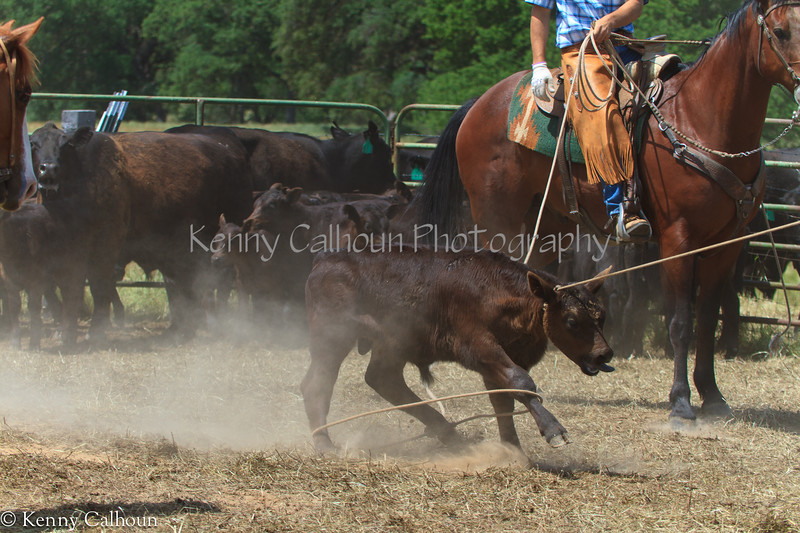 April_28,_2012IMG_0412untitledYolo_Land_&_Cattle_4-29-12