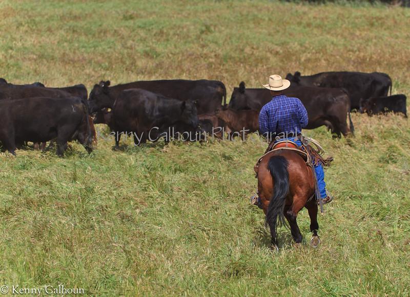 April_28,_2012IMG_9439untitledYolo_Land_&_Cattle_4-29-12