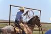 April_28,_2012IMG_0482untitledYolo_Land_&_Cattle_4-29-12