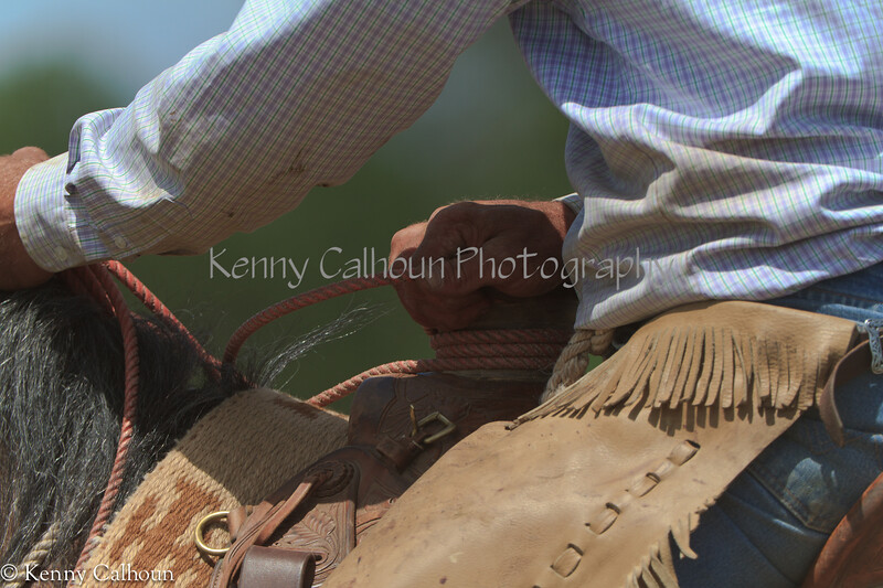 April_28,_2012IMG_0236untitledYolo_Land_&_Cattle_4-29-12