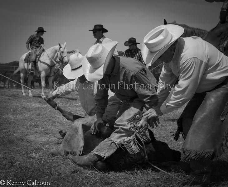 April_29,_2012IMG_8702untitledYolo_Land_&_Cattle_4-29-12-2