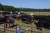 April_29,_2012IMG_8543untitledYolo_Land_&_Cattle_4-29-12
