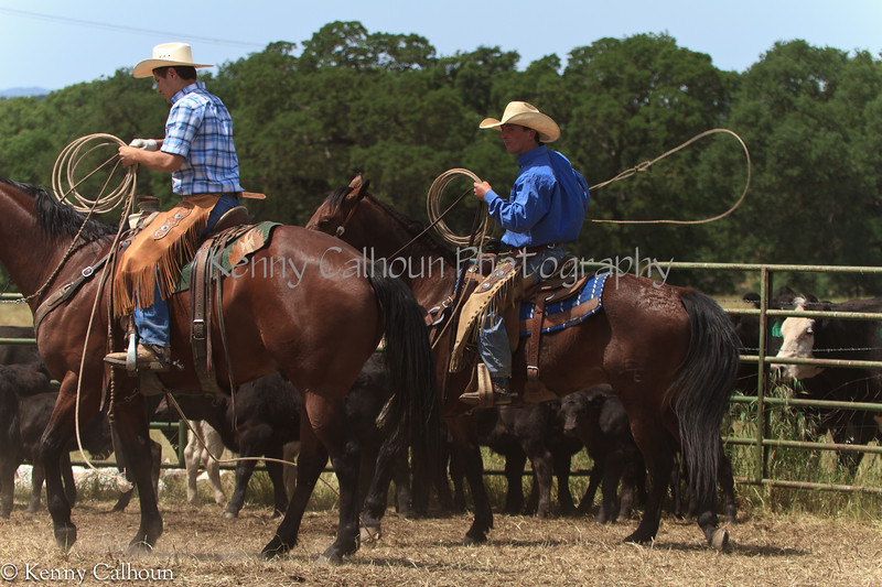 April_28,_2012IMG_0297untitledYolo_Land_&_Cattle_4-29-12