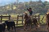 12-20_Yolo_Land_&_Catttle_December_20,_2012IMG_4217untitled