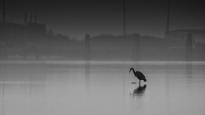 Lone Heron Black and White