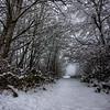 Cowichan Estuary Trail Winter