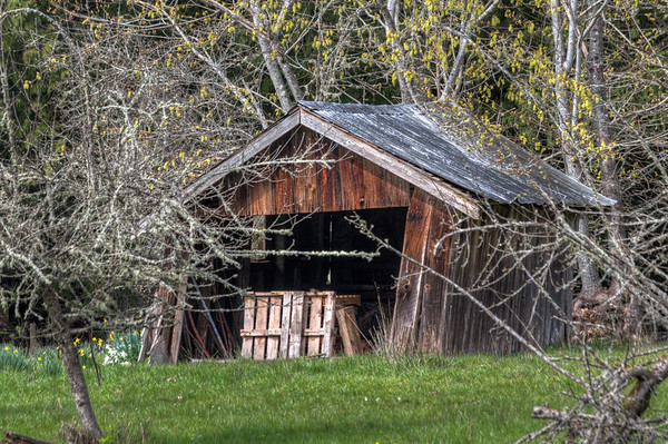 Crooked Weathered Building - Vancouver Island Farm, British Columbia, Canada