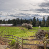 Pastoral Landscape And Barn In Spring - Cedar, Vancouver Island, British Columbia, Canada