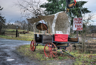 "High Oaks Farm - Victoria, BC, Canada Visit our blog ""Five Minutes Peace"" for the story behind the photos."