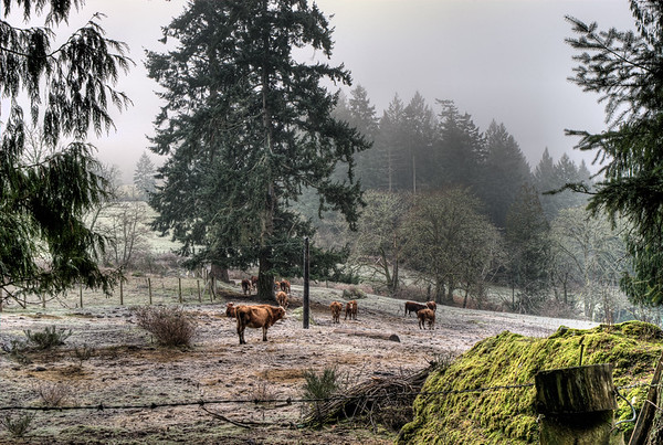 Frost Covered Farm - Cowichan Valley, BC, Canada