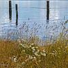 near Rocky Point on Mill Bay