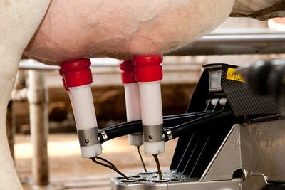 berger_milking_robots_110509_0028