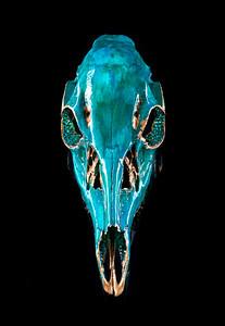 Cox Skull Art