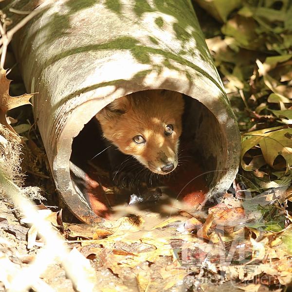 custom den in Forest Park