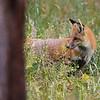"""""""what a Fox!"""""""