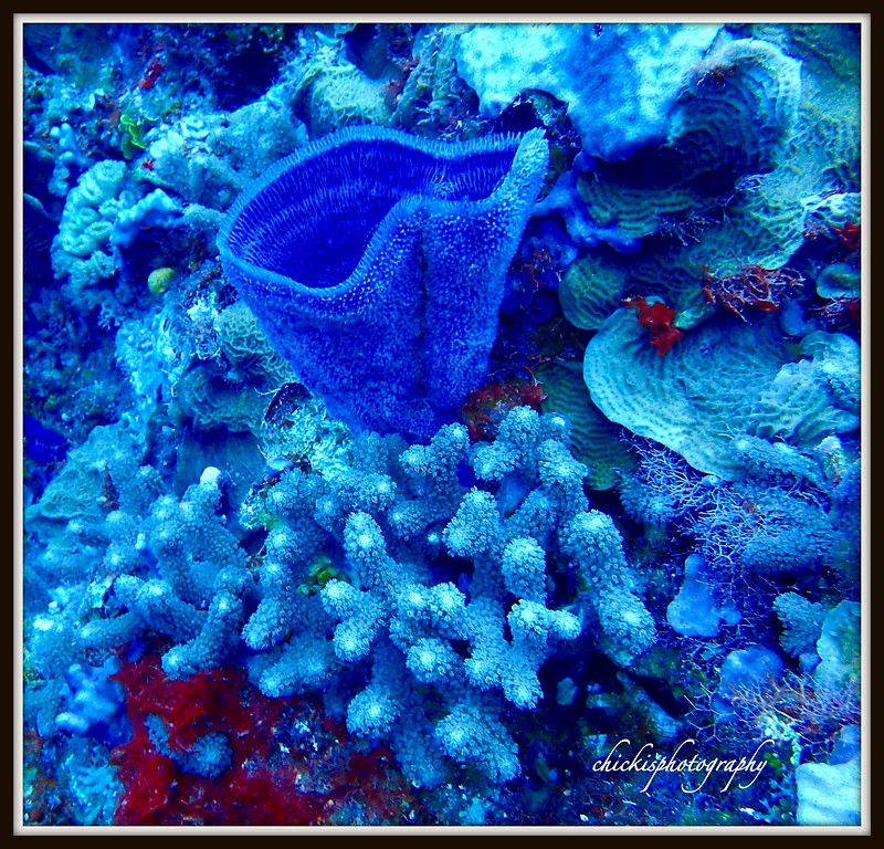 VASE SPONGE WITH SOFT CORALS